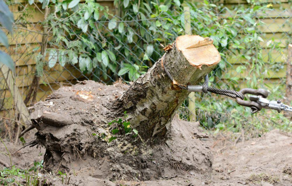 Как удалить дерево не выкорчевывая