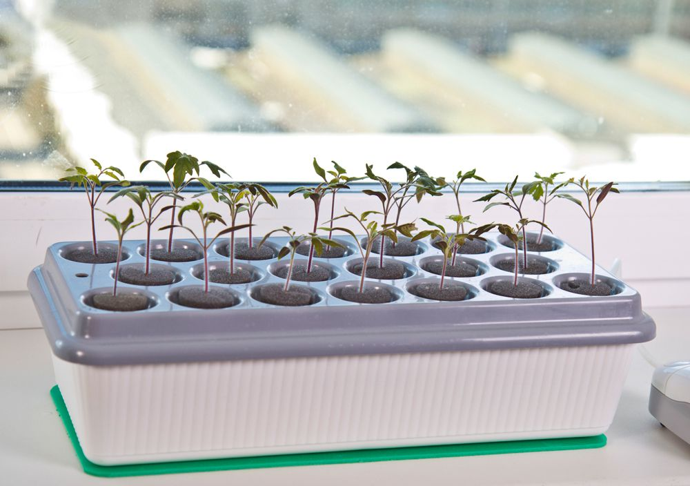 Как вырастить семена гидропоника как выгнать из мочи коноплю