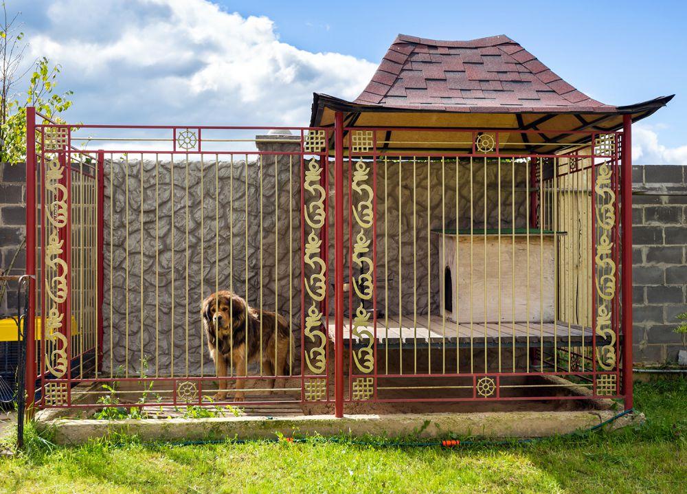 вольеры для собак уличные фото